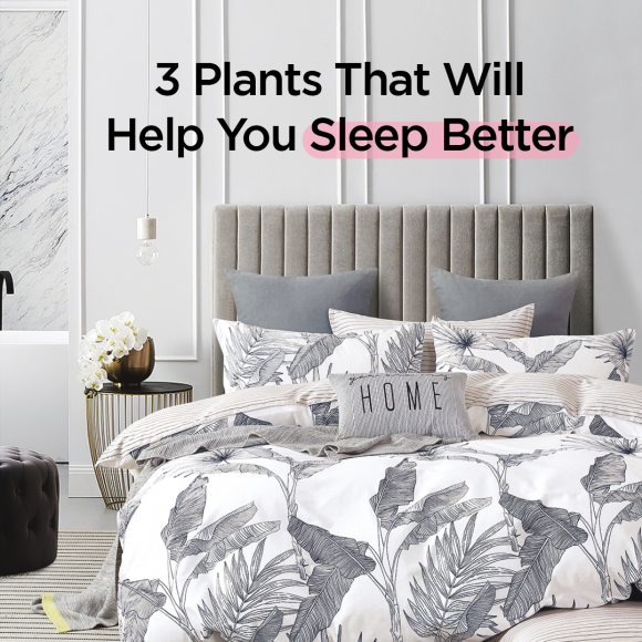 3 plants that will help you sleep better